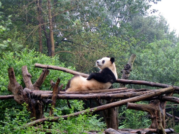 Chengdu Panda Breeding Research Station , September 2004