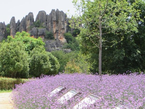 The Naigu Stone Forest, World Natural Heritage Site, Yunnan, China