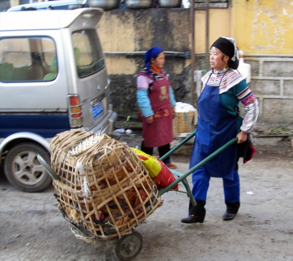 Chicken in the basket, Xingjie, Yunnan, February 2014