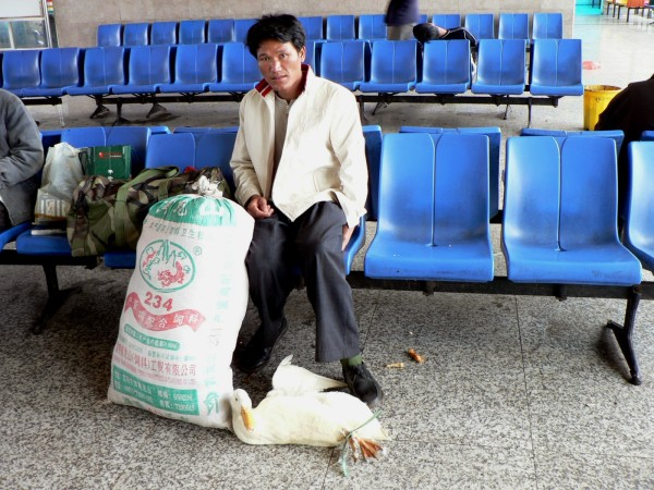 The duck and its owner wait for the bus, Luoping, China October 2008