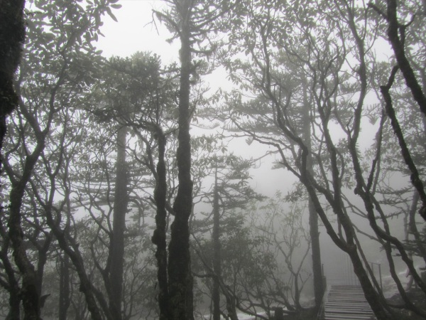 Mist covered trees, Jiaozi Mountain, Yunnan, China  July 2013