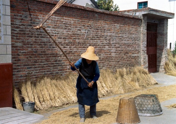 Dali - threshing rice