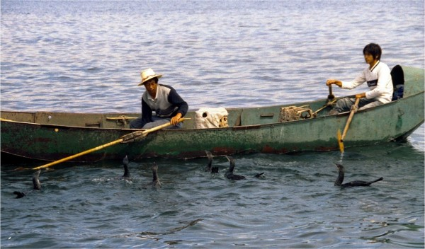 Dali cormorant fishing on Erhai
