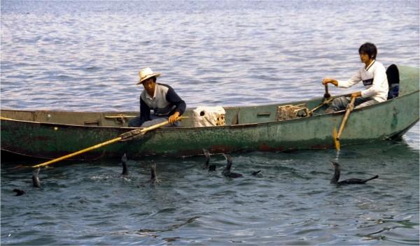 Dali cormorant fishing on Erhai